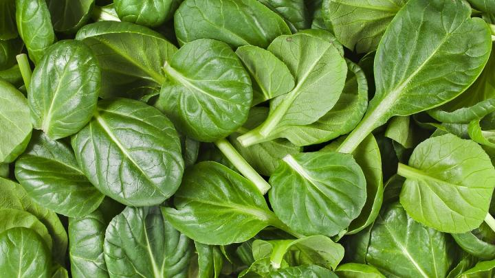 growing spinach leaves