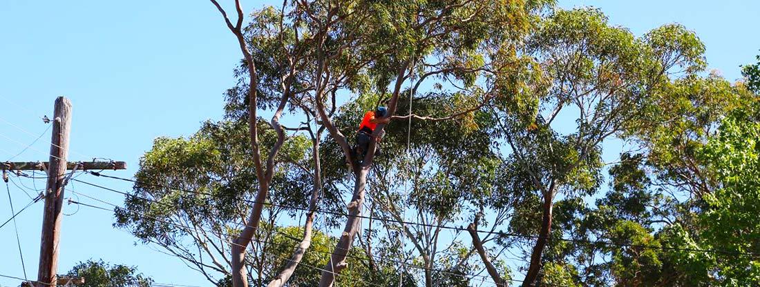 Tree Removal Brisbane QLD